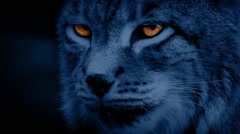 Big Cat Lynx At Night With Glowing Eyes Stock Footage