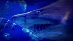 Huge Shark Swims Past Very Close - stock footage