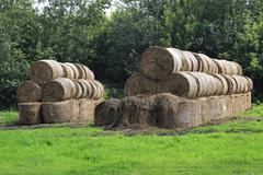 Beautiful haystacks on green lawn in Altai Krai - stock photo