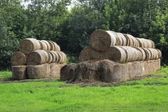 Beautiful haystacks on green lawn in Altai Krai Stock Photos