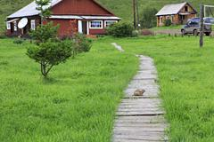 Gopher on the wooden walkway. Health complex Cheremshanka - stock photo