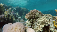 Videography at a depth of 10 meters in the Red sea. Stock Footage