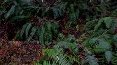Walking Up Some Stairs In A Forest Stock Footage