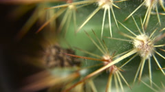 Cactus Rotating _ Loopable Macro Close Up Of Detail And Texture Stock Footage