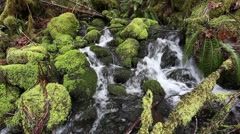 Small Stream Cascade Waterfall Over Green Mossy Rocks Stock Footage