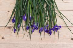 purple flowers with green stems on a wood - stock photo