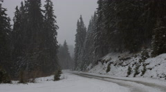 Snowfall in a Pine Forest - stock footage