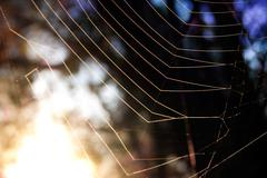 First sun rays on the web - stock photo