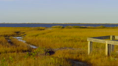 View Of Salt Marsh, Bird Flies By, Another Drops A Fish On Land To Eat It Stock Footage