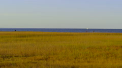 Static Shot Of Marshland With People Clamming On The Shore In The Distance Stock Footage