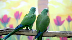 Two cute green parrots Stock Footage