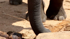 The elephant in the wild in Sri Lanka Stock Footage