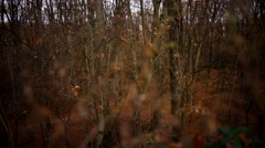 fabulous autumn forest throws off the leaves from the trees - stock footage