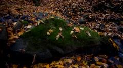 Mountain stream in autumn forest, wild nature Stock Footage