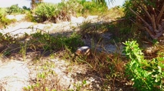 SeaTurtle Eating Grass onLand Stock Footage