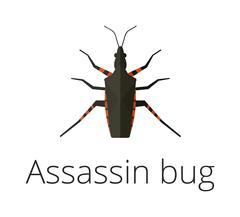 Assassin bug insect vector illustration - stock illustration