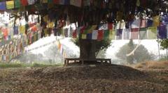 The Buddha Tree in Lumbini Stock Footage