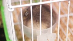 Hamsters in pet market Stock Footage