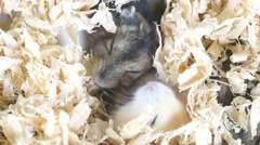 Hamsters in pet market Stock Footage