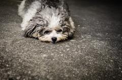 Shabby doggy is lie down on the street Stock Photos