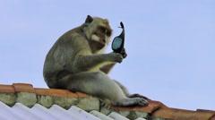 Monkey is  breaking stolen glasses - stock footage