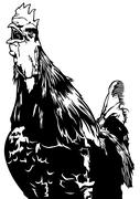 Crowing Rooster - stock illustration