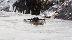 Stock Video Footage of Crabs on the sea shore