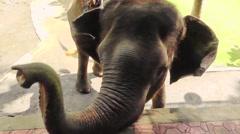 Elephant.Bali Stock Footage