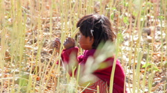 Indian rural child in the field.Rajasthan.Maunt-Abu.2016 Stock Footage