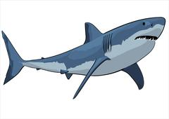 White shark with open mouth Stock Illustration