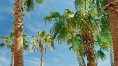 Several palm trees against the sky Arkistovideo