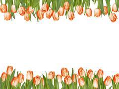 Isolated tulip frame arrangement. EPS 10 - stock illustration