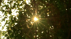 Trees with wind and sun light in good weather all the movements with slow motion - stock footage