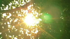 Trees with wind and sun light in good weather all the movements with slow motion Stock Footage