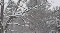 A Forest Snow Stock Footage