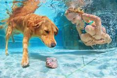 Child with dog dive underwater in swimming pool Stock Photos