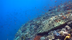 Hard and soft coral reef full of tropical fishes - stock footage