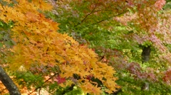 The Fudo stream and the red bridge at Mount Nakano-Momiji, Kuroishi city, Aom Stock Footage
