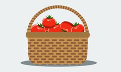 Wicker basket with fresh tomatoes. Illustrated vector. Solid flat color. Stock Illustration