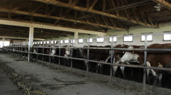Hereford farm  Stock Footage
