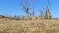 Dry tree standing lonely on the ground grass nature landscape movement Stock Footage