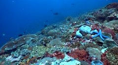 Hard and soft coral reef full of tropical fishes and blue sea star - stock footage