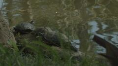 Three Turtles Chillin' on the shore Stock Footage