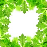 Stock Photo of Frame from spring leaves of oak tree