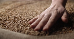 4k Interior close up shot of  hands holding wheat grain in warm light on a jute Stock Footage