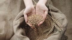 The harvest concept, human hands and Golden wheat,slow motion Stock Footage