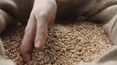 Human hand touching wheat in the bag Stock Footage