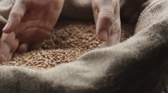 Human hand touching selected grain Golden wheat in slow motion Stock Footage