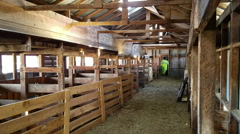 Sheep shearing sheds ready for annual work HD Stock Footage