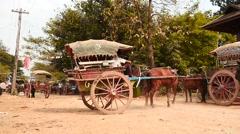 Horses with harnessed carriages in Myanmar village slow motion - stock footage